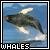 Whales fan